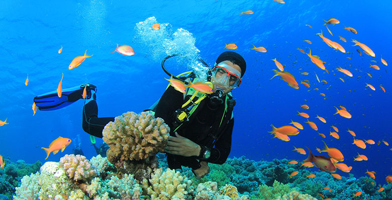 Scuba Diver swims through tropical fish on coral reef